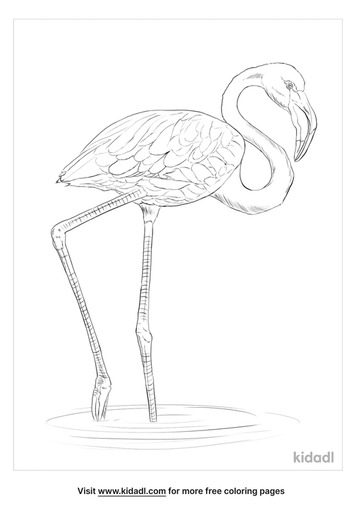 greater-flamingo-coloring-page