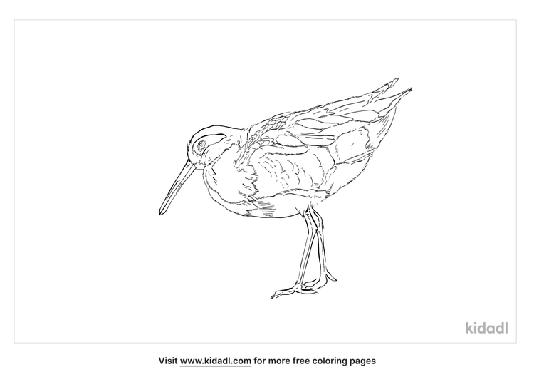 greater-painted-snipe-coloring-page