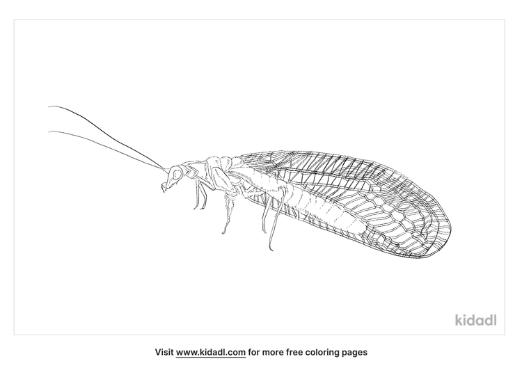 green-lacewing-coloring-page
