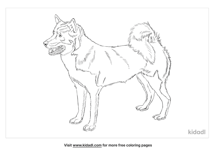 greenland-dog-coloring-page