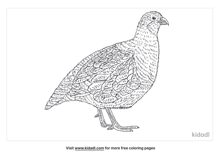 grey-partridge-coloring-page