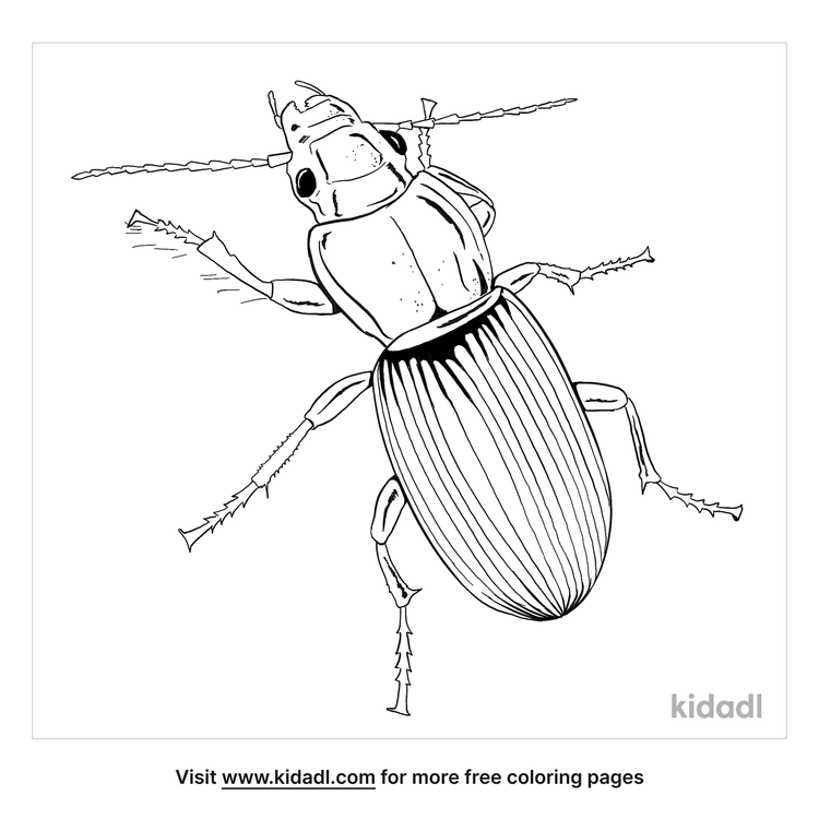 ground-beetle-coloring-page