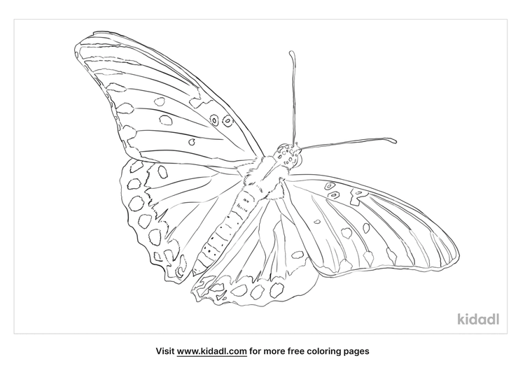 gulf-fritillary-butterfly-coloring-page