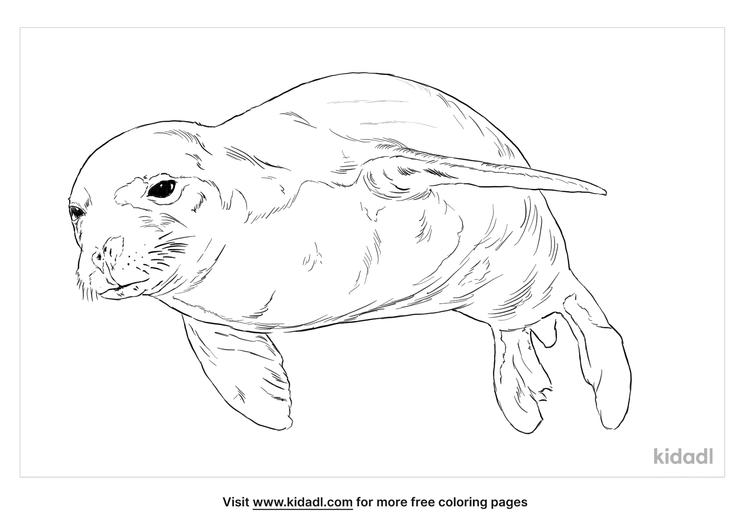 hawaiian-monk-seal-coloring-page