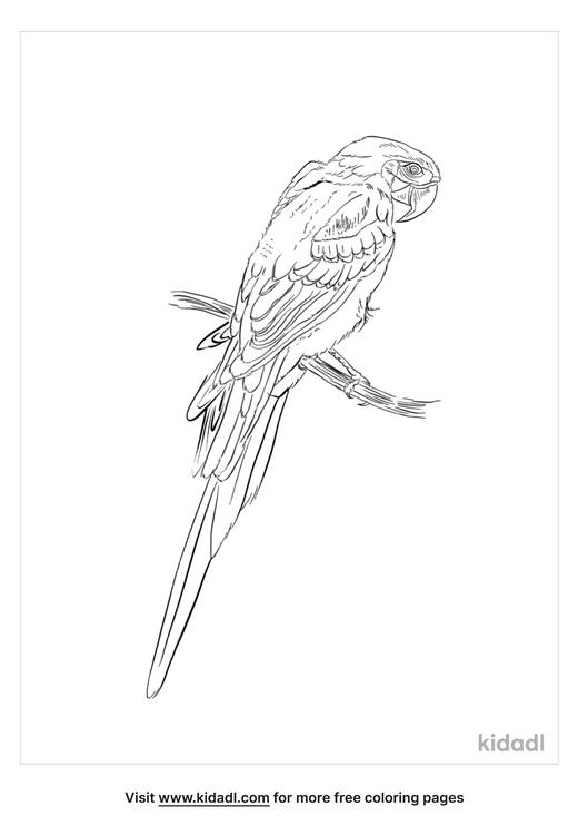 hispaniolan-parakeet-coloring-page