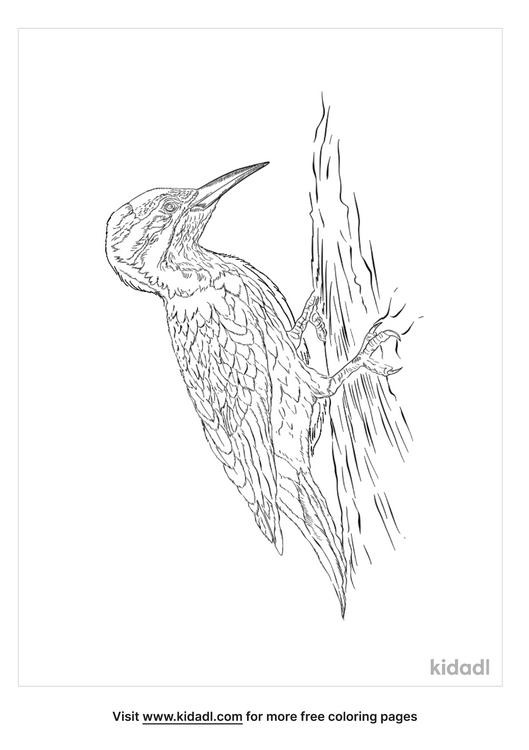 hispaniolan-woodpecker-coloring-page