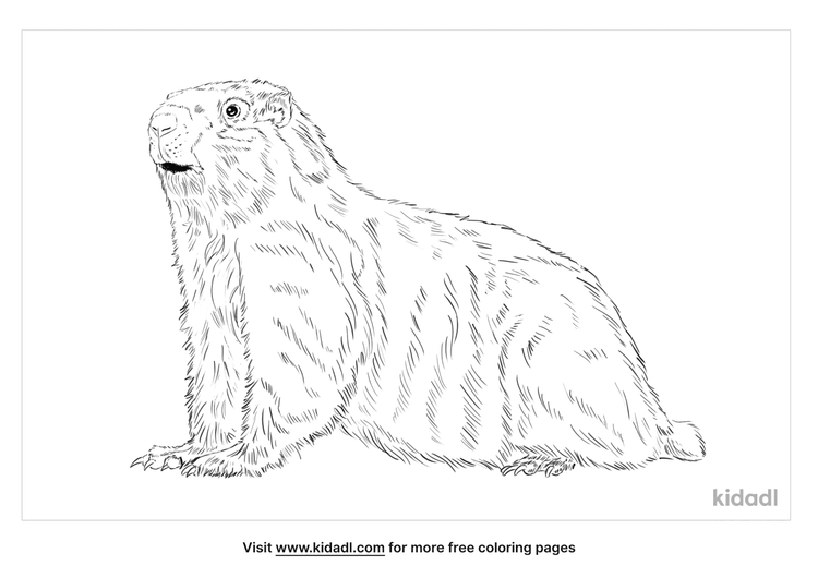 hoary-marmot-coloring-page