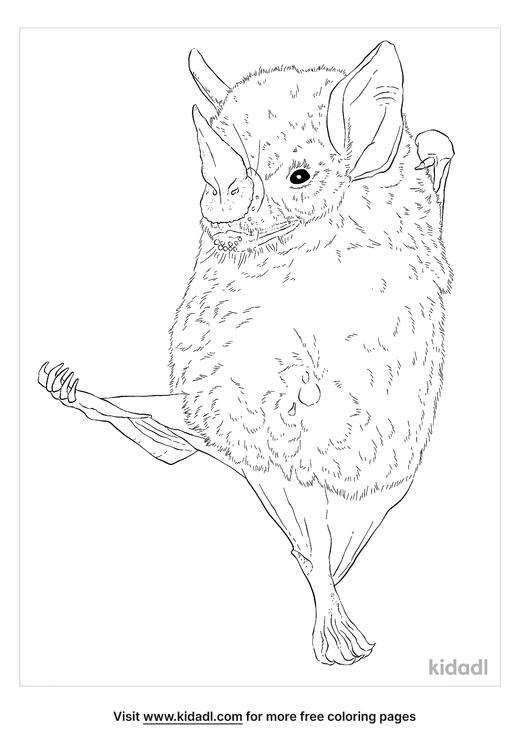 honduran-white-bat-coloring-page