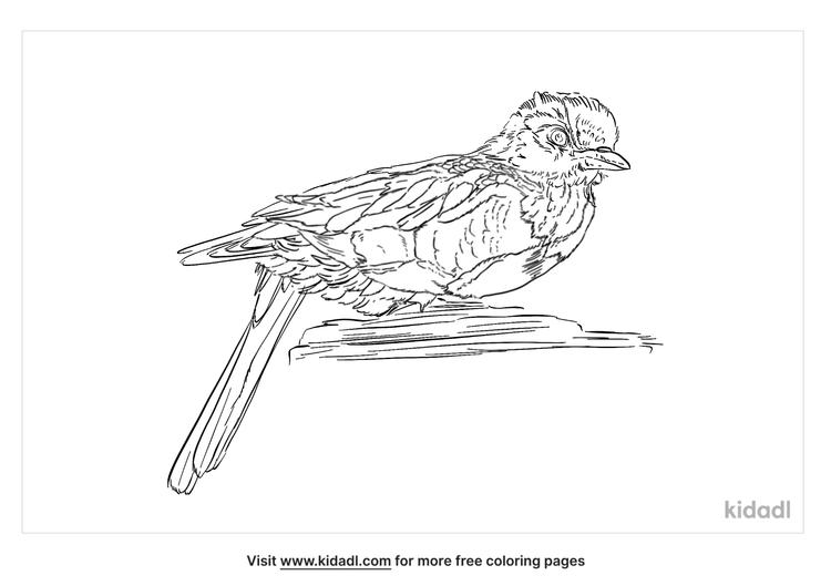 honeyguide-coloring-page