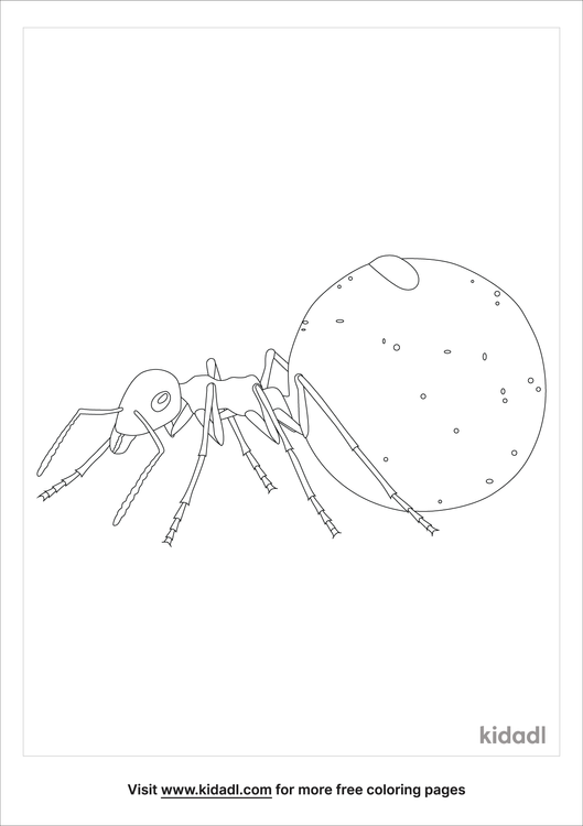 honeypot-ants-coloring-page.png