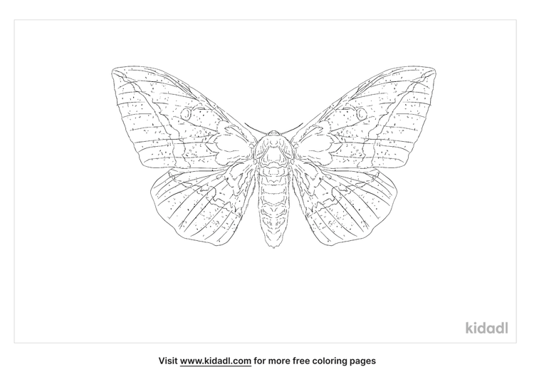 imerial-moth-coloring-page