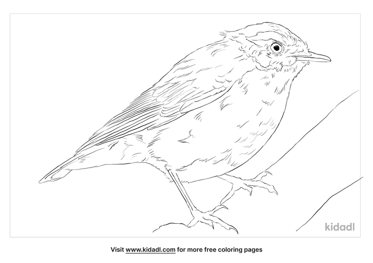 indian-blue-robin-coloring-page