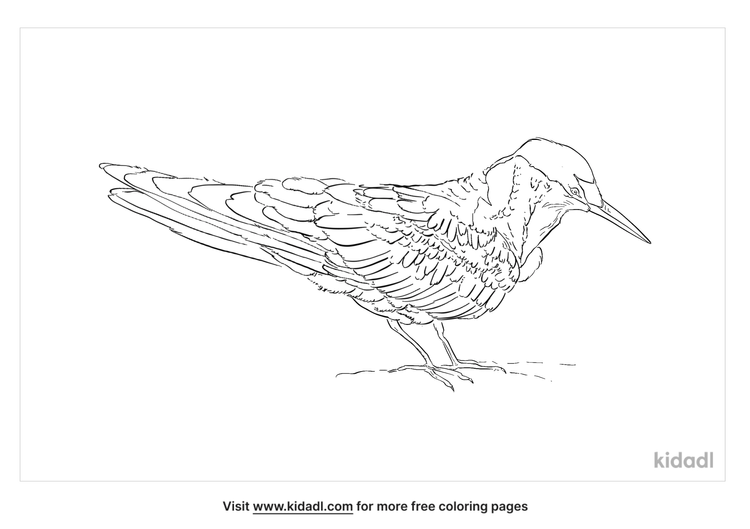 indian-skimmer-coloring-page