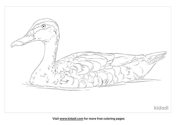 indian-spot-billed-duck-coloring-page
