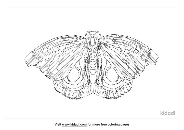io-moth-coloring-page