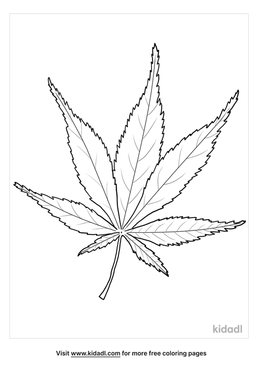 japanese maple leaf coloring page-lg.png