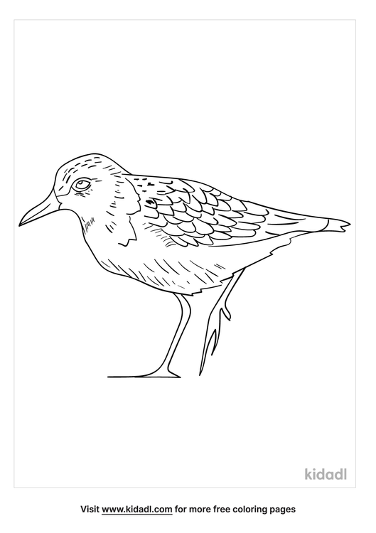 least-sandpiper-coloring-page