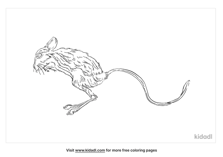 lesser-egyptian-jerboa-coloring-page