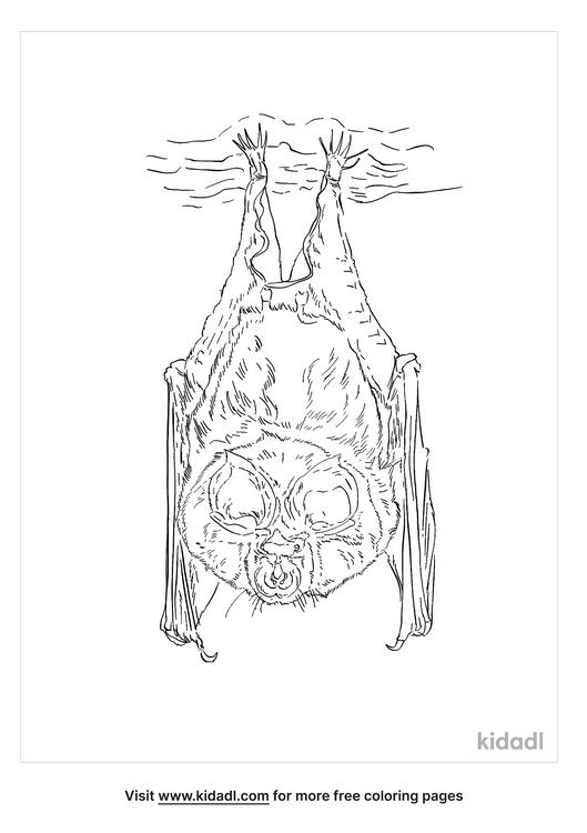 lesser-horseshoe-bat-coloring-page