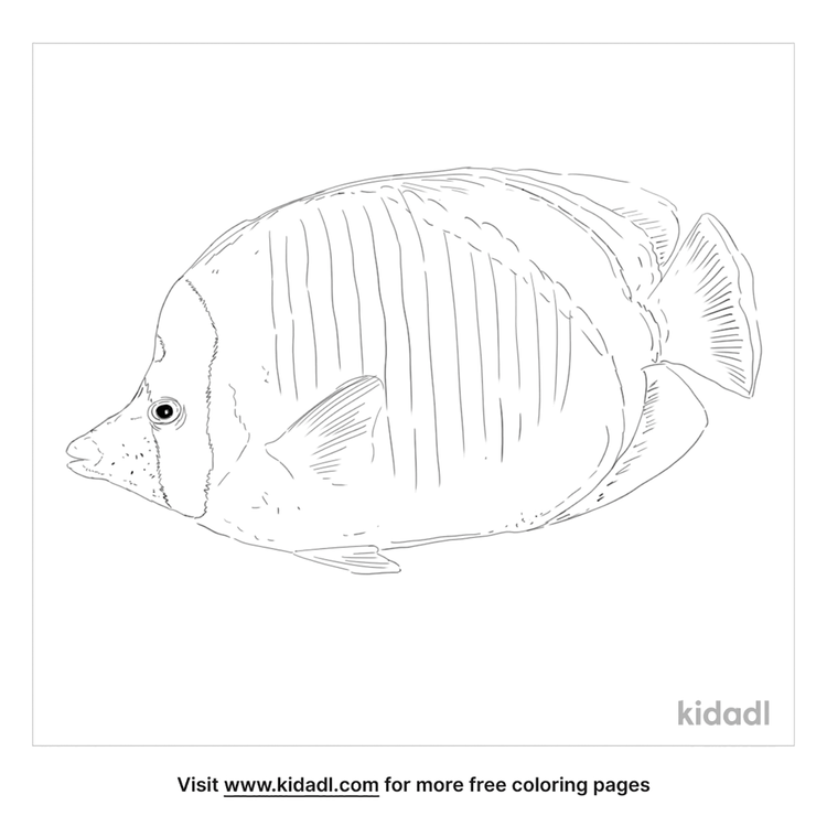 lined-butterflyfish-coloring-page