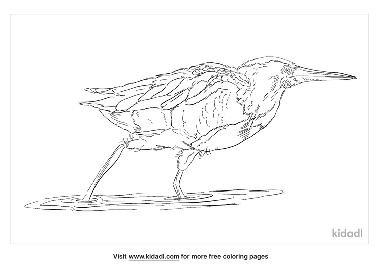 little-bittern-coloring-page