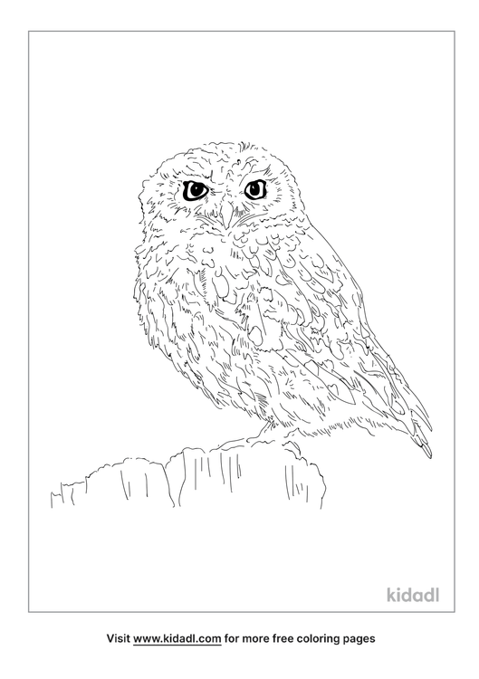little-owl-coloring-page