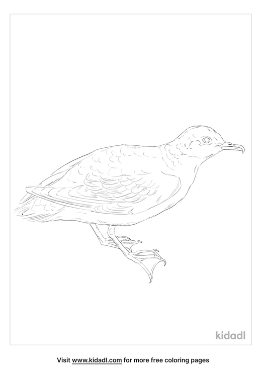 little-shearwater-coloring-page