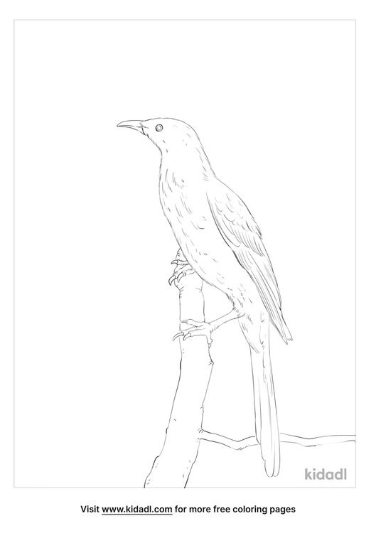 little-wattlebird-coloring-page