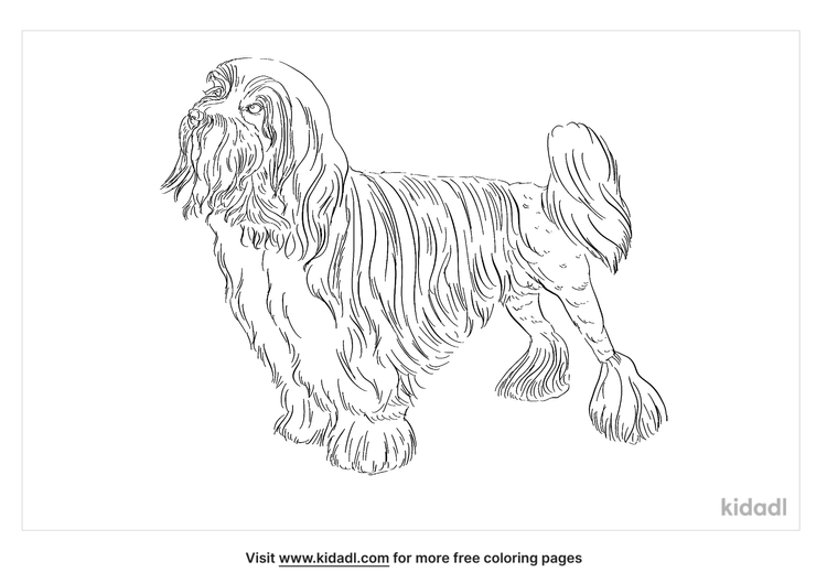 lowchen-coloring-page