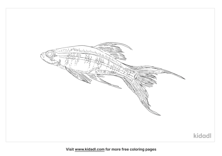 lyretail-coloring-page