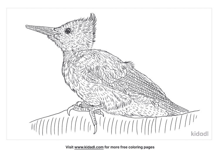 magellanic-woodpecker-coloring-page