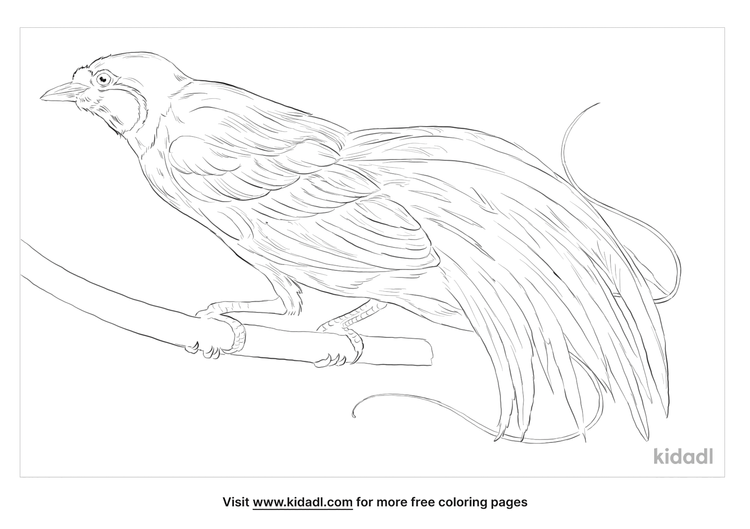 magnificent-bird-of-paradise-coloring-page