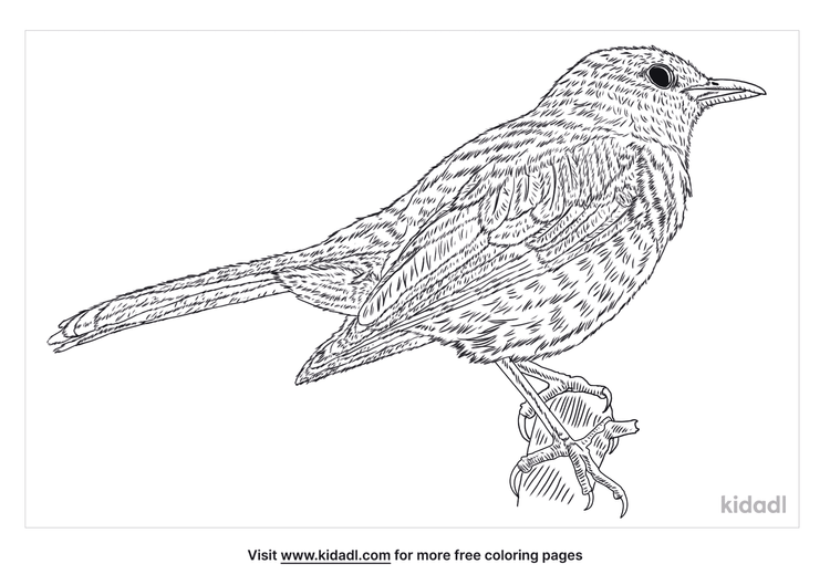 magpie-robin-coloring-page