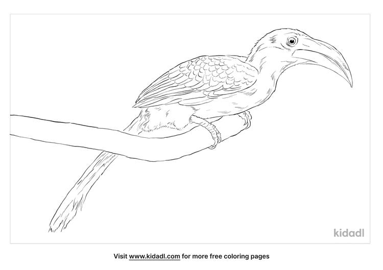 malabar-grey-hornbill-coloring-page