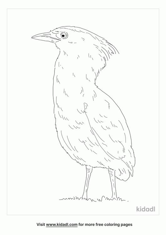 malayan-night-heron-coloring-page