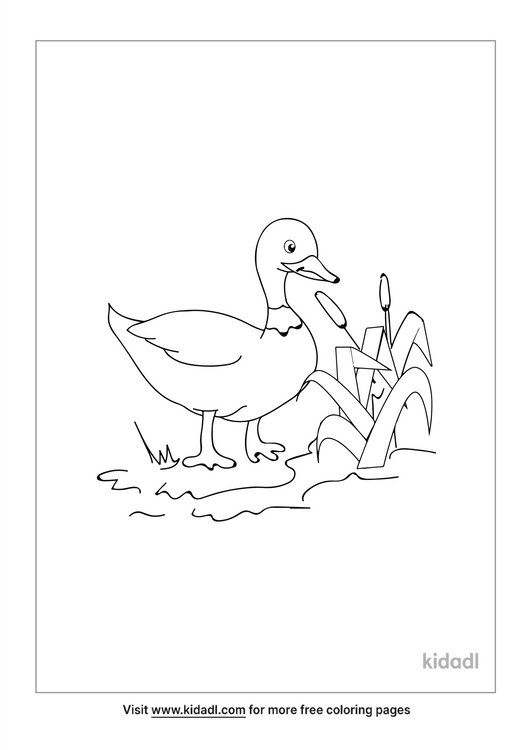 mallard-duck-coloring-page.png