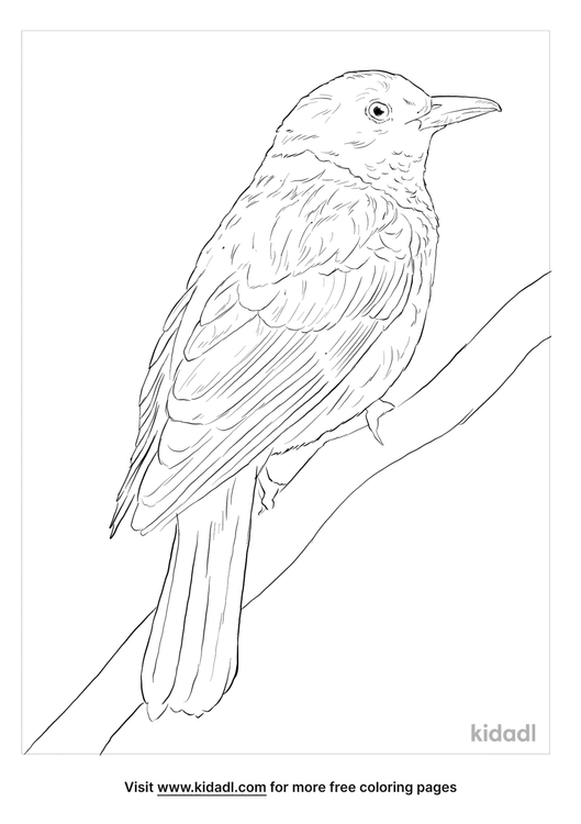 maroon-oriole-coloring-page