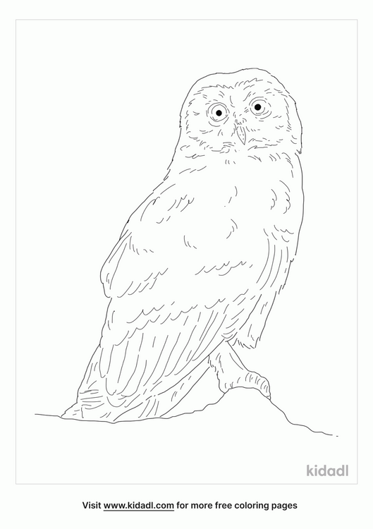 marsh-owl-coloring-page
