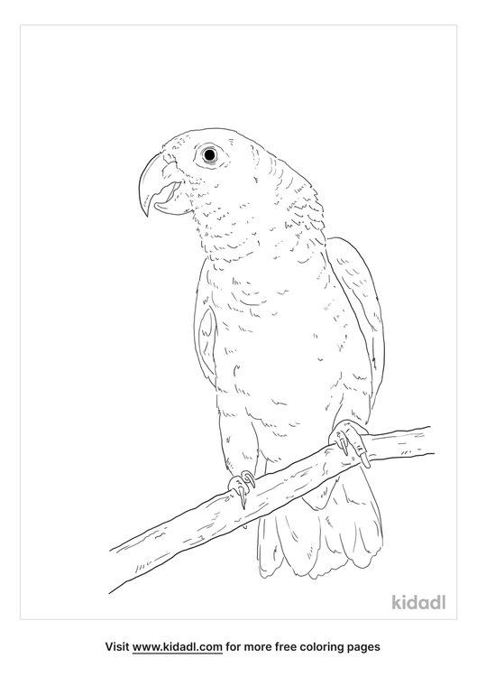 mealy-parrot-coloring-page