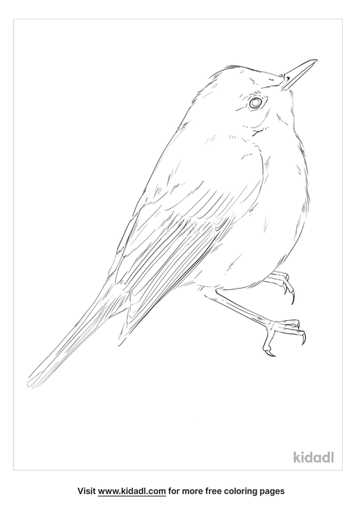 melodious-warbler-coloring-page