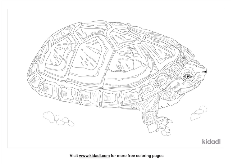 mexican-mud-turtle-coloring-page