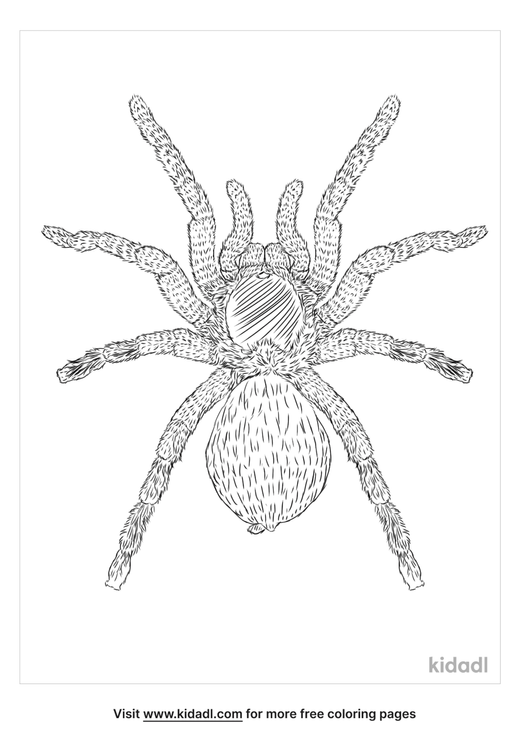 mexican-red-knee-tarantula-coloring-page