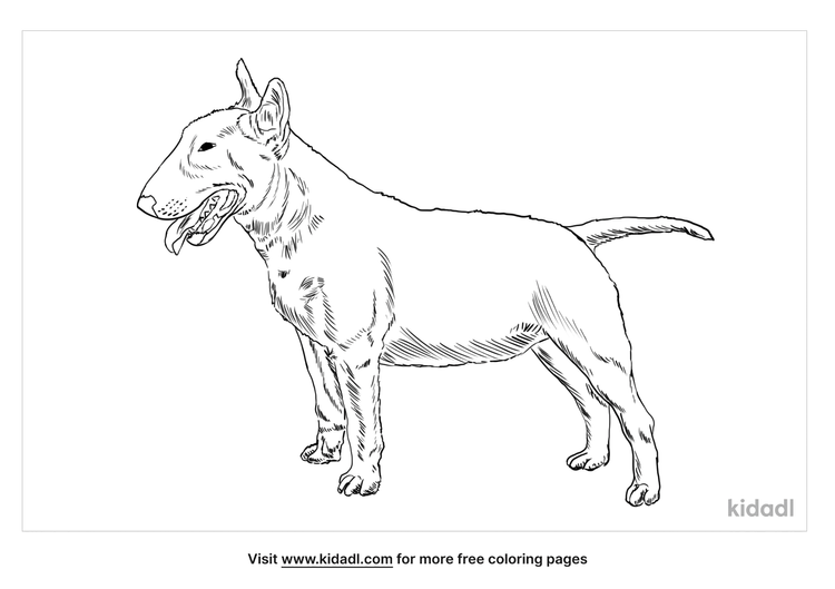 miniature-bull-terrier-coloring-page