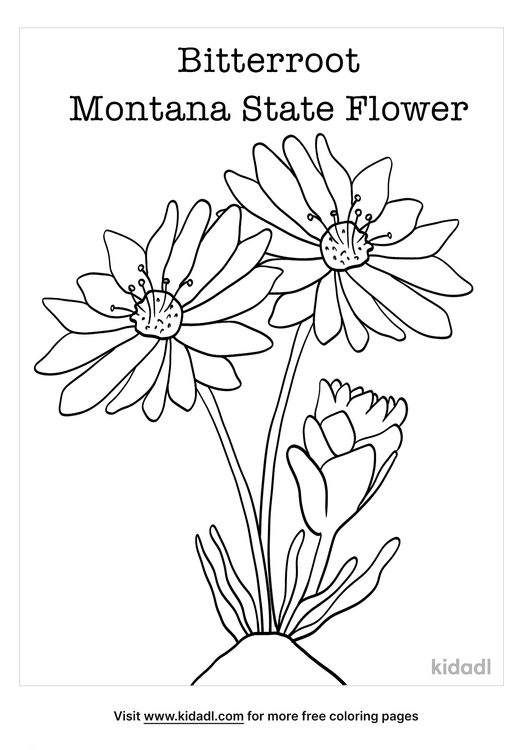 montana state flower coloring page-lg.png