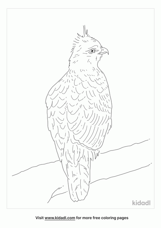 mountain-hawk-eagle-coloring-page