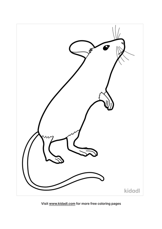 mouse coloring pages-1-lg.png