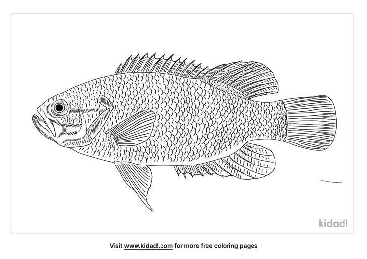 mud-sunfish-coloring-page