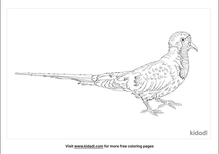 namaqua-dove-coloring-page