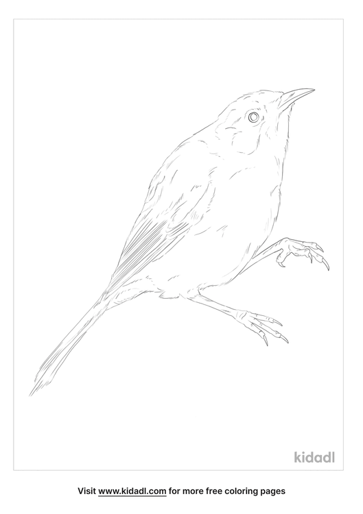 new-zealand-bellbird-coloring-page