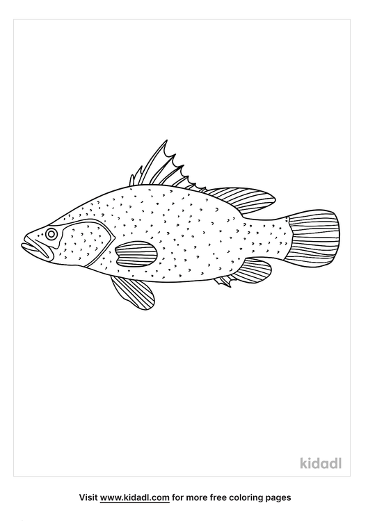 nile-perch-coloring-page.png